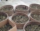 斑嘴野鸭种苗,大雁种苗,绿头野鸭种苗