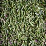 供应 特产白茶散装批发 特级明前新绿茶叶
