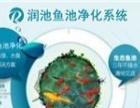 广东茂名鱼池净化水质处理