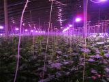 长治植物生长灯批发专业的植物生长灯要到哪买