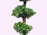 姑苏绿植租摆绿化养护办公室植物租赁