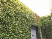 长沙优惠的立体绿化植物哪有卖_立体绿化植物厂家