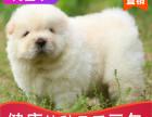 本地出售纯种松狮幼犬,十年信誉有保障