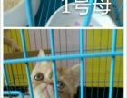 猫舍升级所有加菲猫都卖一只不留