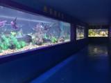 房地产海洋展活动方案-广州出售海洋生物展览租赁价格