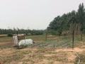 出租洛龙白马寺周边土地40亩