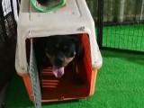 银川宠物训练基地