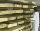 邯郸黄粉虫批发零售黄粉虫的养殖前景如何