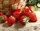 圣水山谷农场草莓采摘开始了!