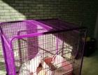 猫笼子九层新两个颜色