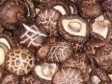 长期供应各种蘑菇 香菇 人工种植菌种 干香菇