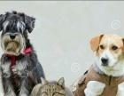 家庭宠物训练指导