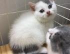 深圳哪里有卖宠物猫的深圳哪里有猫舍卖蓝猫深圳出售蓝猫