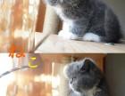 加菲猫弟弟妹妹找新家(3只)