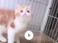 加菲猫美女2个月