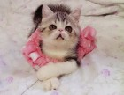 广州什么地方有猫舍/广州哪里有卖加菲猫