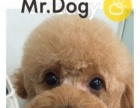 Mr.Dog宠物会所美容服务
