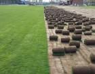 北京草坪销售 草坪价格 草坪绿化 卖草坪 别墅草坪销售