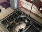 1.2米全新狗笼