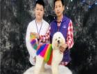 广州派多格宠物美容培训学校 包教会实体教学
