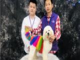 廣州派多格寵物美容培訓學校 包教會實體教學