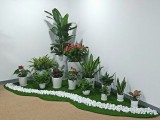 办公室绿植花卉租赁租摆零售批发室内盆栽活动庆典租用