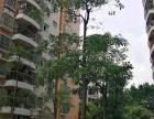南山村委统建楼 荔林山景 花园小区 开发商保留户型热销荔林山景