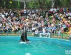 哪里有海狮表演出租动物表演出租专业提供此项服务