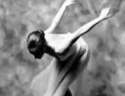 桐乡民族舞 爵士舞 肚皮舞 现代舞 拉丁钢管舞舞培训学校