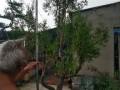 泰山松柏盆景,自家精心培养,盆栽十年,成活率高