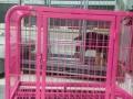 狗笼,宠物笼便宜卖了