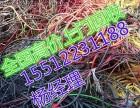 舞钢电缆回收 舞钢废电缆回收(当前)报价