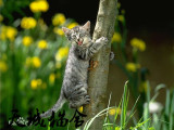 纯种虎斑猫,猫舍繁殖,健康纯种,品质保障