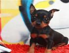 每一位在本犬舍买狗的客户都要签订购犬协议,协议保证售后30天