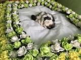 杭州寵物火化 狗狗火化 寵物火化場 寵物墓地