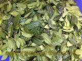 金花茶叶子是怎么样的 防城/毛瓣金花茶叶子价格多少钱一斤