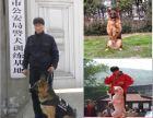 常熟梅李镇专业的上门宠物训练,可信赖的正规训犬学校欢迎详细