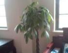 办公室绿植租摆