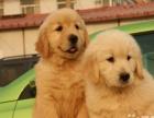 加微信看丨做良心犬舍卖健康宠物丨金毛价格无所谓