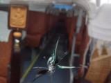 成都哪有汽车玻璃修复