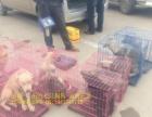 济南机场宠物托运 托运宠物价格 怎样空运宠物