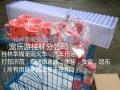 桂林本地宠物托运速运空运火车托运