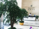 【名卉源花卉】郑州花卉租赁专家,一站式服务