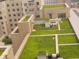 临安绿植出租送货到家开业乔迁办公室写字楼绿化盆景植物绿化养护
