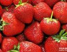 太谷东高速口 范村采摘草莓