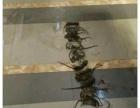 衡阳专业灭鼠灭蟑灭白蚁灭臭虫灭跳蚤灭虱子等消杀公司