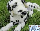 斑点狗多少钱 斑点狗多少钱一只