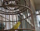 家养芙蓉鸟;黄玉鸟;辣椒红玉鸟