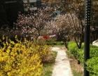长治路奥林花园复试楼中楼给你一个烂漫温馨的家,无中 介费