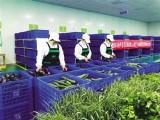 西安蔬菜配送供應商,西安食堂蔬菜配送,西安食堂食材配送